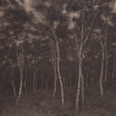 Silent Respiration of Forests - Hokkaido. Shimamaki, 2011. Platinum print on Gampi paper. Es. 6:9. cm 26,5x34