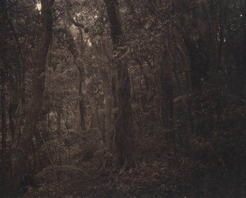 Silent Respiration of Forests. Ashizuri #21, 2010. Platinum print on Gampi paper. Es. 3:9. cm 25,4x20,3