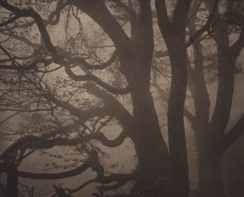 Silent Respiration of Forests. Mt. Ishizuchi #13, 2010. Platinum print on Gampi paper. Es. 7:9. cm 25,4x20,3