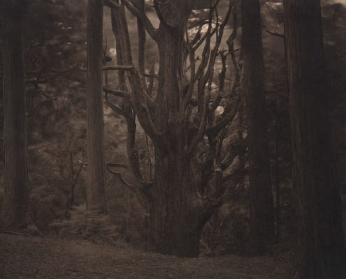 Silent Respiration of Forests. Mt. Takanawa #1, 2010. Platinum print on Gampi paper. Es. 6:9. cm 20,3x25,4