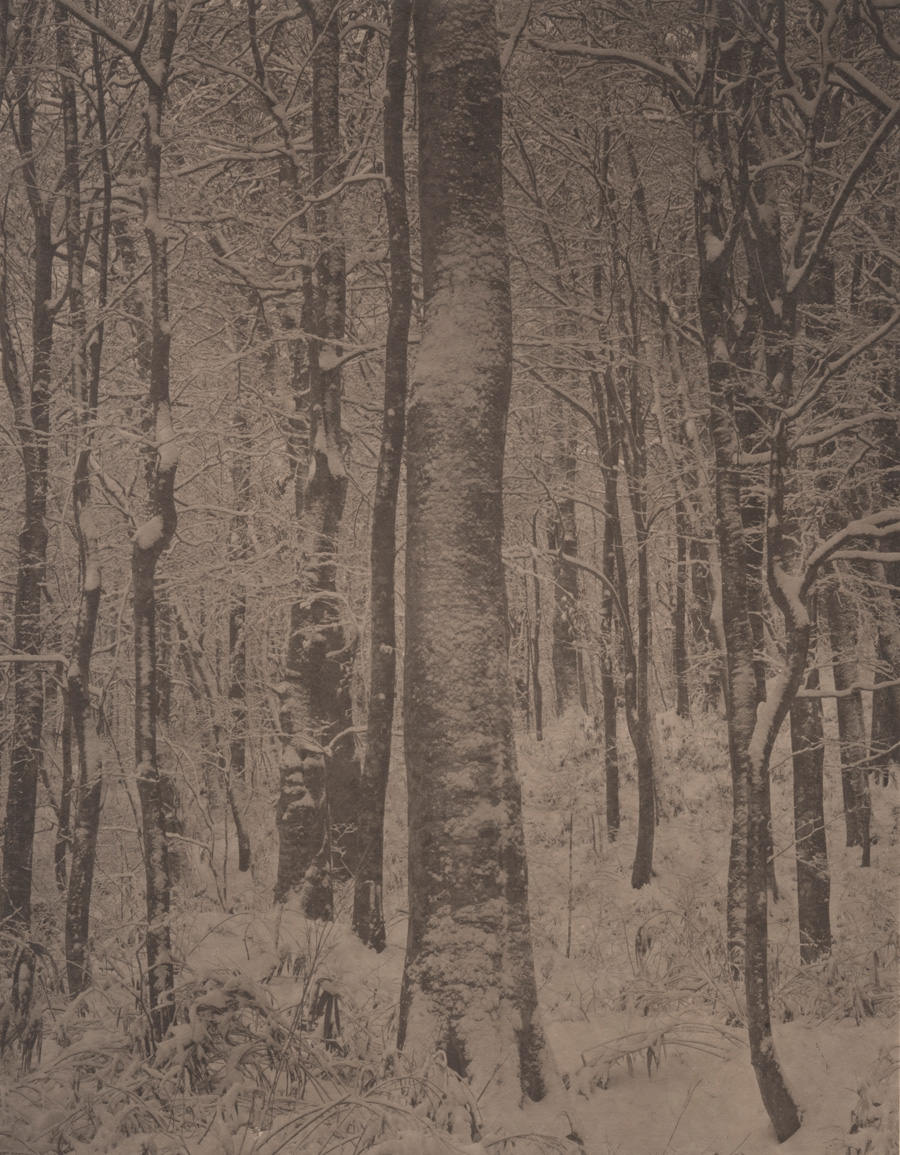 Silent Respiration of Forests. Shiragami Sanchi #6, 2003-2014. Platinum print on Gampi paper. Es. 2:9. cm 34x26,5