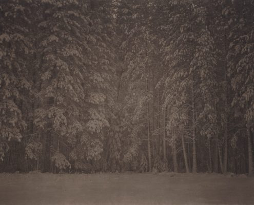 Silent Respiration of Forests. Yosemite #10, 2010. Platinum print on Gampi paper. Es. 5:9. cm 26,5x34