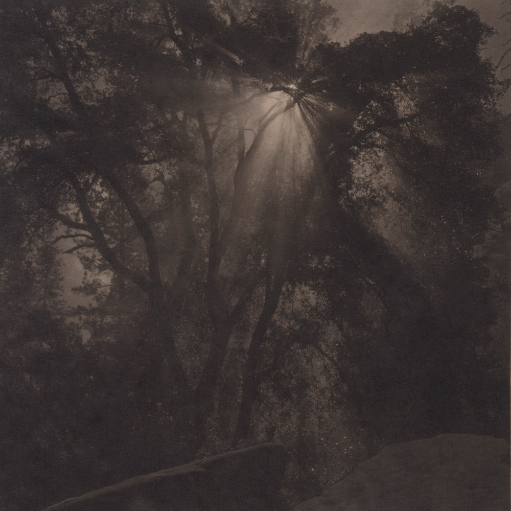 Silent Respiration of Forests. Yosemite #2, 2010. Platinum print on Gampi paper. Es. 1:9. cm 19x19