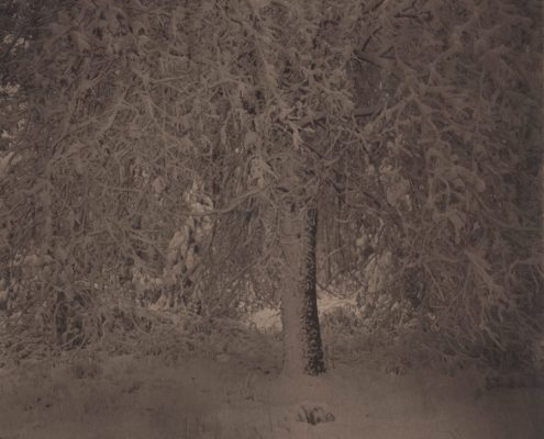 Silent Respiration of Forests. Yosemite #8, 2010-2011. Platinum print on Gampi paper. Es. 3:9. cm 19x19