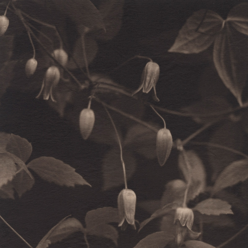 Evanescence. Field #15, 2008. Platinum print on Gampi paper. Es. 5/9. cm 13,6x13,6