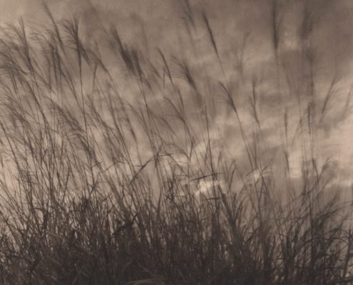 Evanescence. Field #14, 2008. Platinum print on Gampi paper. Es. 5/9. cm 13,6x13,6